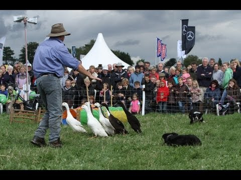 Dog And Duck Show Reel