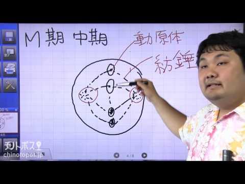 酒井翔太のどすこい生物 part2(体細胞分裂)