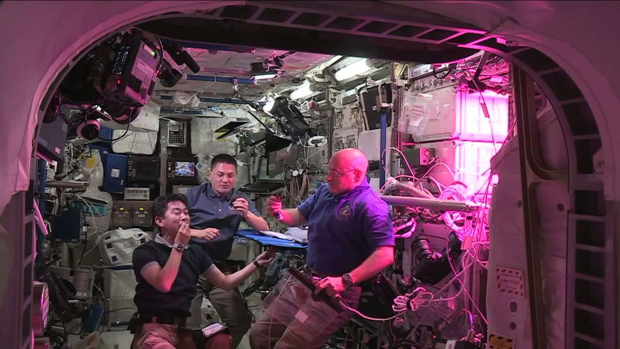США посадят перец в космосе. Когда будет собран первый урожай?
