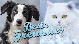 Katzen an Hund gewöhnen - Unsere Zusammenführung von 3 Katzen und einem Hund