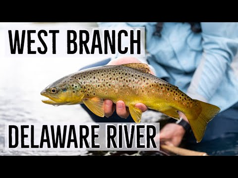 Dry Fly Fishing For Brown Trout | West Branch Delaware River