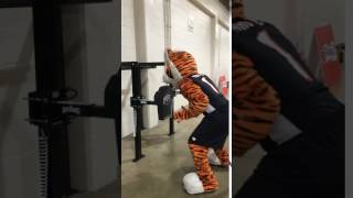 Who Dey Bengals Mascots Working on Proper Striking Form