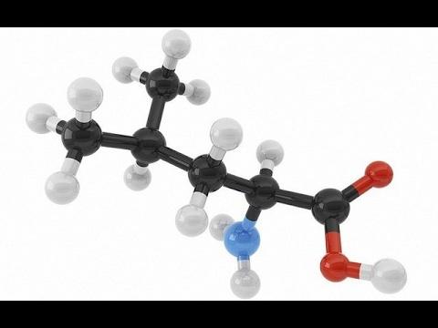 La leucina el aminoacido mas poderoso para construir musculos