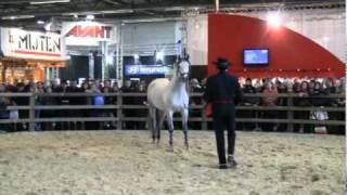 Flanders Horse Expo Gent 2011