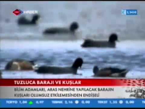 2013 Nisan TRT Haber Aras Kus Cenneti