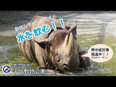 平川動物公園 動物たちがひたすら水を飲む!