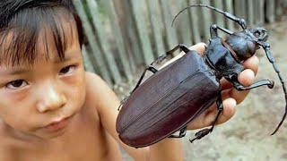 10 BIGGEST INSECTS EVER DISCOVERED