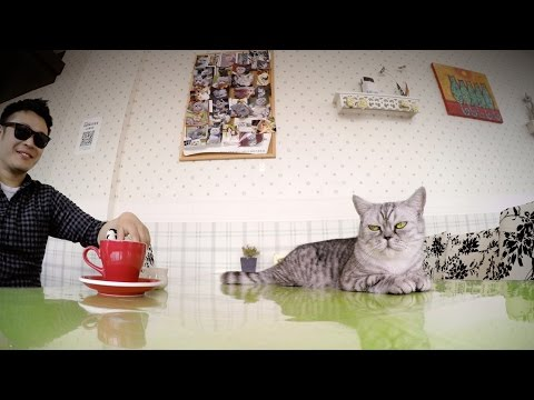 GoPro: Kittens and Coffee – A Cat Cafe in Shanghai