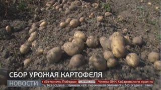 Сбор урожая картофеля. Новости. 06/09/2021. GuberniaTV