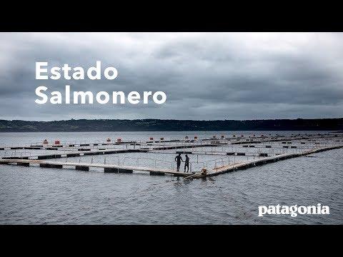 Estado Salmonero | The Fight to Save Chile