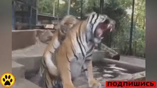 видео приколы ржачные до слез про животных