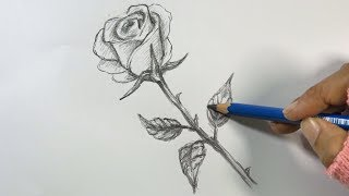 How to Draw a Rose Step by Step   Hihi Pencil