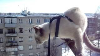 Смотреть онлайн Кот-экстремал на балконе