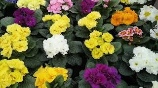 Jubiläumsfeier und Frühlingsfest