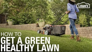 Lawn Care 101: How to Weed, Seed, Feed, Mow, & Water