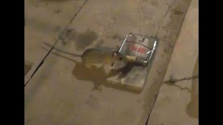 На что ловить мышку в мышеловке