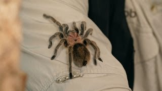 How to Identify, Treat & Prevent Illness | Pet Tarantulas