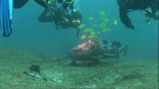 preview picture of video 'Kas Diving in Tofo, Mozambique 2012'