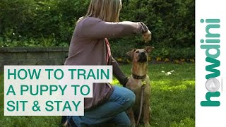 How to Train a Puppy to Sit and Stay - How To Trai...