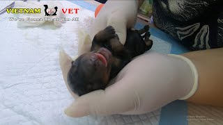 Reviving cutest baby newborn puppies – God has saved these little baby dogs