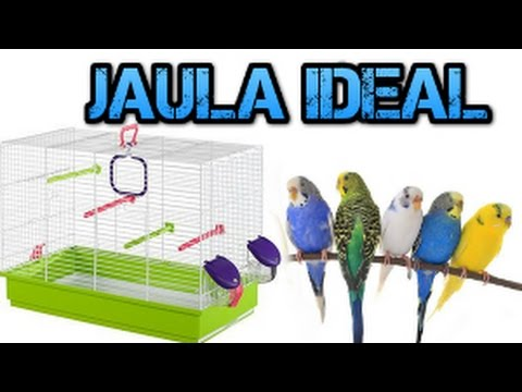 Jaula ideal para tener Periquitos-Rincon animal