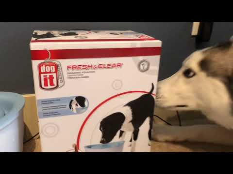 Dogit Design Fresh and Clear Drinking Fountain Review
