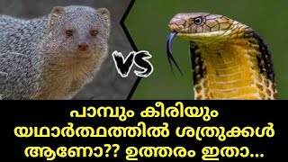 MONGOOSE AND SNAKE ARE ENEMIES IN REAL ??? REVEALED |
