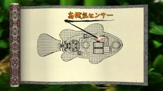 ロボフィッシュ金魚&鯉