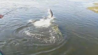 Приколы на рыбалке рыбацкие курьезы