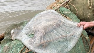 GIANT JELLYFISH Catch And Cook   Vietnam Street Food   Vietnam Seafood