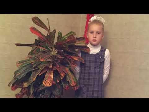 3 б класс Комнатные растения