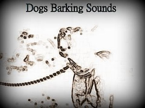 Woof, ruff, bow-wow - who likes dogs barking sounds?