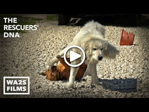 Big Boy Dog Drags Girl Dog with His WHAT?!? You Won't Believe It! - Hope For Dogs | My DoDo