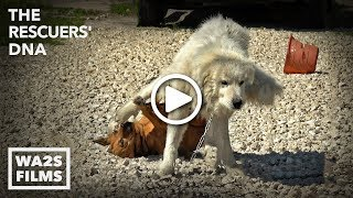 Big Boy Dog Drags Girl Dog with His WHAT?!? In #StrayDogCity! - scenes that inspired RUFF LIFE