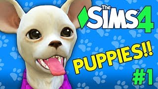 The Sims 4 - PUPPIES AND MURDER - The Socials of Brindleton Bay - PART 1
