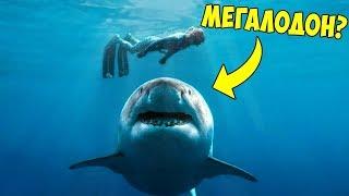 Появление Этой Акулы Шокировало Мир