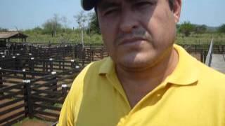 preview picture of video 'DR  RECOMIENDA ESTAR ATENTOS A NUEVAS ENFERMEDADES del Ganado en S I V -RED de Ganaderos'