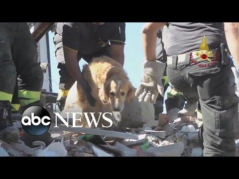 Ο Ρομέο βρέθηκε στα χαλάσματα του σεισμού της Ιταλίας μετά από 9 ημέρες