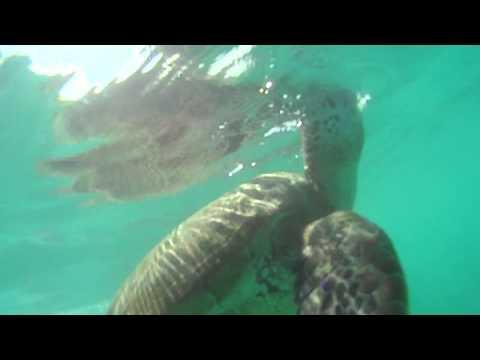 0 - ウミガメと泳ぐ☆