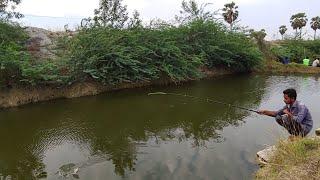 Fish hunting||Fishing,baam fish and tilapia fishing