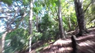 Mad Cow trail, Whangarei