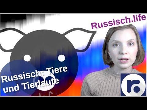 Russisch: Tiere und wie sie machen [Video]