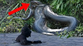 10 Biggest Monsters In The Amazon! by Epic Wildlife