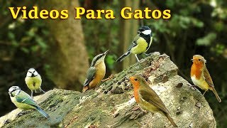 Videos Para Gatos : Pájaros Cantando en el Bosque - 8 Horas