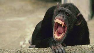 Подборка смешные животные