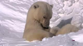 Колыбельная медведицы из м/ф Умка. Lullaby  Bear.