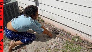 GIRL NEXT DOOR FINDS NESTING ANIMALS UNDER the HOUSE!