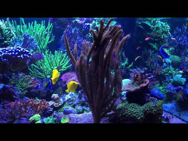 Stuart Bertram Reef Tank July 2015
