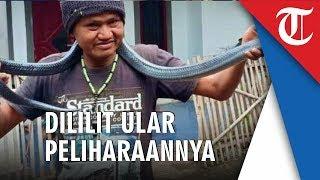 Pria di Bandung Tewas Dililit Ular Sanca Peliharaannya, Menyerang saat Dimandikan