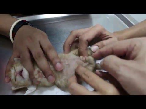 Oxiuros y lombrices intestinales